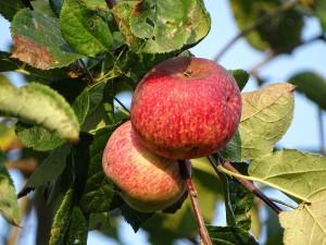 gesunde-ernährung-aepfel